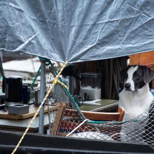 Собака на лодке