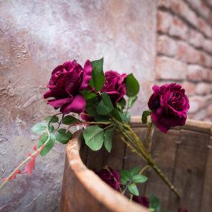 Роза в деревянной бочке