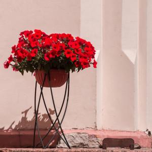 Ярко алые цветы в кованной вазе у входа.